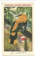 Oiseaux De Nos Régions. Le Loriot. Signée Fontinelle. Crème Eclipse Cirage - Animaux