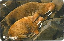 Singapore - Walrusses - Animals - 234SIGA2K - 2000, Used