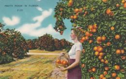 Pretty Pickin' In Florida Orange Grove - Cultivation