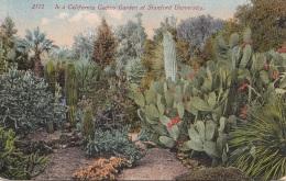 CALIFORNIA Cactus Garden At Stanford University, Ak Um 1930, Leichte Klebespuren Auf Rückseite - Unclassified