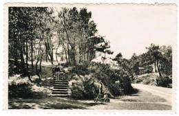 De Haan, Den Haan, Le Coq Sur Mer, Het Bosje, Le Petit Bois (pk32936) - De Haan