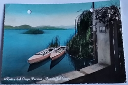 TORRE DEL LAGO PUCCINI (9637) - Lucca
