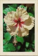CPM Voeux De Nouvel An De Guyane (fleur) - Nouvel An