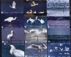 Complete Set Of 12 Taiwan Early Bus Ticket Cards Black-faced Spoonbill Bird (A0048-0059) - Cars