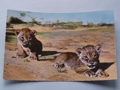 LIONCEAUX ( 1515 ) Faune Africaine - Anno 19?? ( Zie Foto Details ) !! - Lions