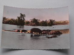 HIPPOPOTAMES Au Bain ( 1101 ) Faune Africaine - Anno 19?? ( Zie Foto Details ) !! - Hippopotamuses