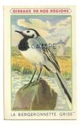 Oiseaux De Nos Régions. La Bergeronnette Grise. Signée Fontinelle. Crème Eclipse Cirage - Animaux