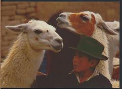 °°° 3743 - PERU - JOVEN CAMPESINO CON LLAMAS °°° - Perù