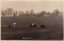 Hants  -  SOBERTON, Church & Cow Field  - Real Photo. - Angleterre