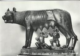 Roma - Lupa Con Romolo E Remo - Museo Capitolino.   # 05913 - Museum