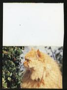 CALENDRIER DE POCHE 2004  - JOLI CHAT PERSAN ROUX -   VIERGE   -  FORMAT  PLIÉ : 8 X 11 Cm - - Calendars