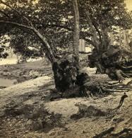 Royaume Uni Ecosse Sur Les Bords Du Loch Lomond Anciennne Photo Stereo GW Wilson 1865