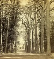 Royaume Uni Warwickshire Cedar Avenue Cedres Guy's Cliff Anciennne Photo Stereo Alex Wilson 1865