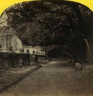 Royaume Uni Derbyshire Haddon Hall Jardins Promenade Anciennne Photo Stereo Petschler 1865