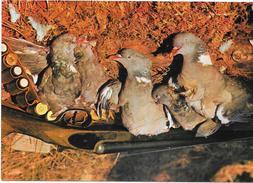 LANDES - 40 - CHASSE A LA PALOMBE - MOD - - Oiseaux
