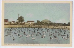 WINDSOR Jack Miner'r Bird Sanctuary Kingsville Near Windsor - Windsor