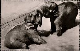 ! Alte Ansichtskarte 1960 Wuppertal Elefanten Im Zoo, Elephants - Olifanten