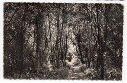CAROLLES-EDENVILLE--1957--La Vallée Des Peintres,--cachet Secap Muette CAROLLES-50......pas Très Courante - Altri Comuni