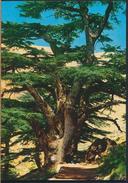 °°° 3860 - LEBANON LIBAN - THE CEDARS °°° - Libano