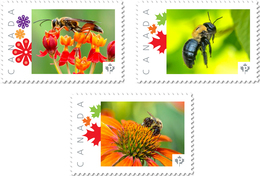 BEE, BUG, WASP, HONEYBEE Set Of 3 Picture Postage Stamps Canada 2017 P17-04be3