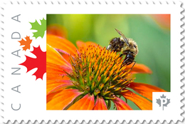 BEE, HONEYBEE On ECHINACEA FLOWER Picture Postage Stamp Canada 2017 P17-04be3-2 - Honeybees