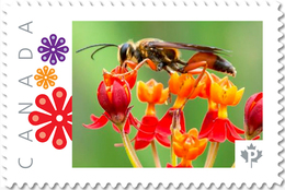 WASP, BUG, BEE On LANTANA FLOWER Picture Postage Stamp Canada 2017 P17-04be3-3 - Honeybees