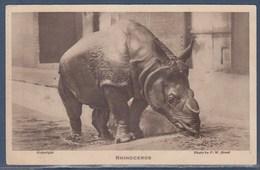 = Rhinocéros Au Jardin Zoologique De Londres - Rhinocéros