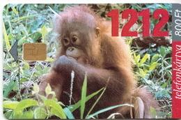 Hungary Phonecard With Monkey - Jungle