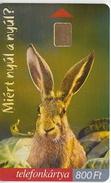 Hungary Phonecard With Rabbit - Konijnen