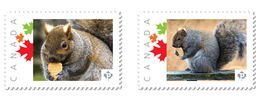 SQUIRREL With COOKIE Set Of 2 UNIQUE Picture Postage Stamps Canada 2017 P17-04sq2 - Knaagdieren