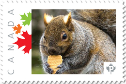 SQUIRREL With COOKIE Face UNIQUE Picture Postage Stamp Canada 2017 P17-04sq2-1 - Rodents