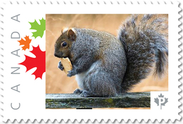 SQUIRREL With COOKIE Profile, Side View UNIQUE Picture Postage Stamp Canada 2017 P17-04sq2-2 - Knaagdieren