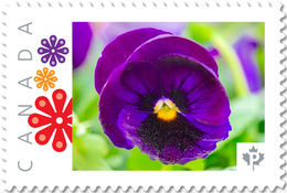 PANSY PURPLE Flower Unique Picture Postage Stamp Canada 2017 P17-04pa5-3