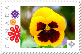 PANSY YELLOW-PURPLE Flower Unique Picture Postage Stamp Canada 2017 P17-04pa5-4