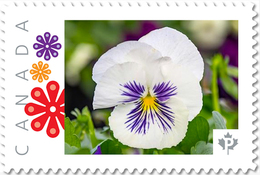 PANSY WHITE Flower Unique Picture Postage Stamp Canada 2017 P17-04pa5-5