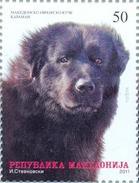 MK 2011-585 DOG, MACEDONIA, 1 X 1v, MNH - Mazedonien