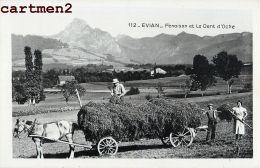 CARTE PHOTO : EVIAN-LES-BAINS FENAISON DENT D'OCHE AGRICULTURE ATTELAGE FERME 74 HAUTE-SAVOIE - Evian-les-Bains