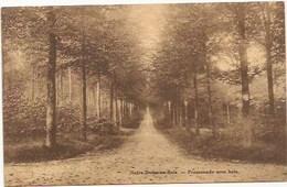 Notre Dame Au Bois - Jesus Eik:  Promenade Sous Bois - Overijse