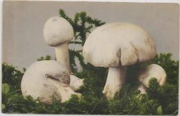 CPA Champignon Mushroom Non Circulé - Funghi