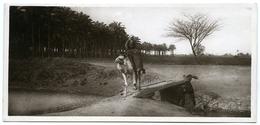 EGYPT : PALMWOOD - Other