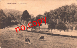 PETITES DALLES (76) Le Stade Dallais - Très Très Rare - - Autres Communes