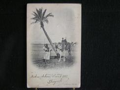 P 193 /  Algérie -  Targui Et Son Mehari  /  Circulé En 1903 - Algérie