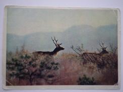 Tadjikistan. Tian Shan Mountains. Bukhara Deer / Bactrian Deer- Old USSR Postcard 1958 - Tajikistan