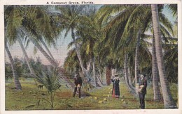 A Cocoanut Grove In Florida - Farms