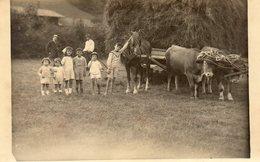74Fo  38 Uriage Carte Photo Enfants Posant Devant Un Attelage De Boeufs Et Cheval En 1921 - Uriage