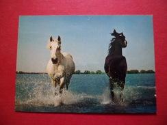 Carte Postale Edition De France Marseille  13814 La Camargue Cheveaux Sauvages à Travers Les Marais  Neuve B/TB - Pferde