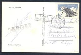 Russia CCCP 1966 Moscow Air Mail Postcard: Fauna Birds: Eagle Adler Aigle 鹰 Aquilla  Aguila; Birds Of Pray - Águilas & Aves De Presa