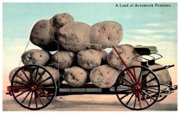 16117  Exaggeration Aroostock Potatoes - Postcards
