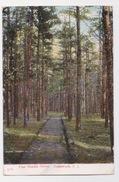Pine Needle Grove.  LAKEWOOD ,N.J.  1908 - Etats-Unis