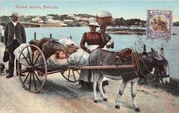 BERMUDES / Washer Women - Beau Cliché - Bermudes